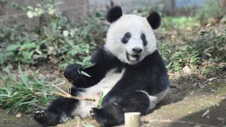 毎日パンダ